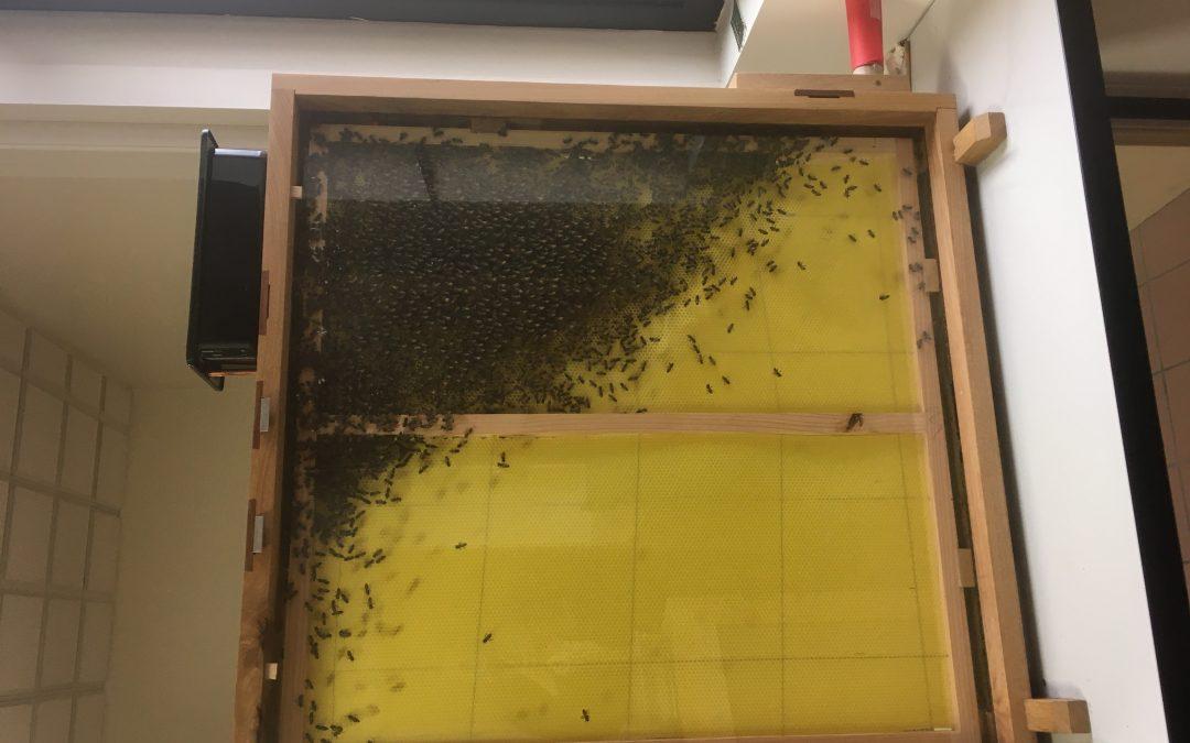 Le retour des abeilles à Descartes